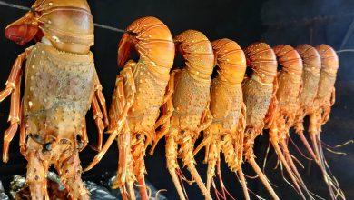 Photo of Необычные деликатесы из живых существ