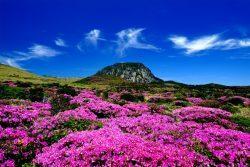Идеи для отдыха в Южной Корее