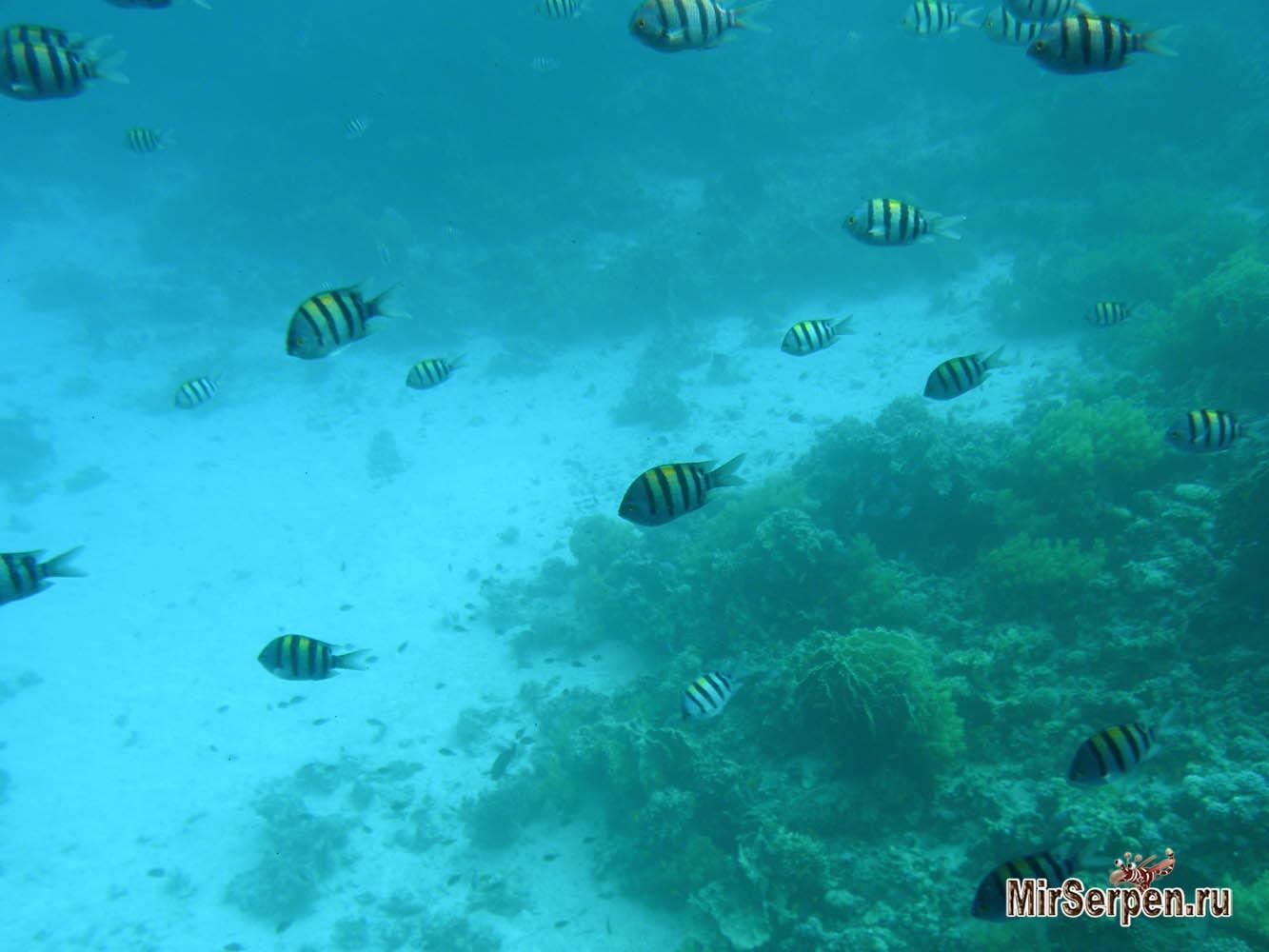 Почему в Египте в море нельзя кормить рыбок