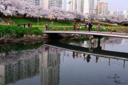 Блоги про Южную Корею на русском языке