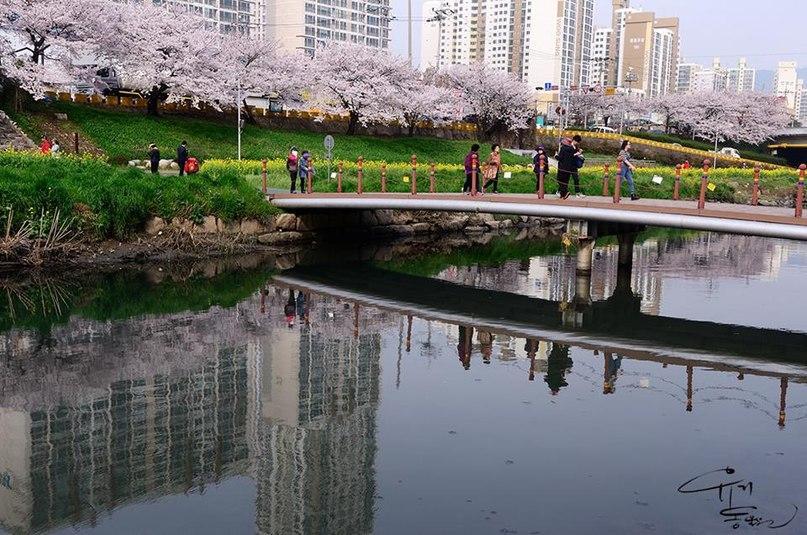Photo of Блоги про Южную Корею на русском языке