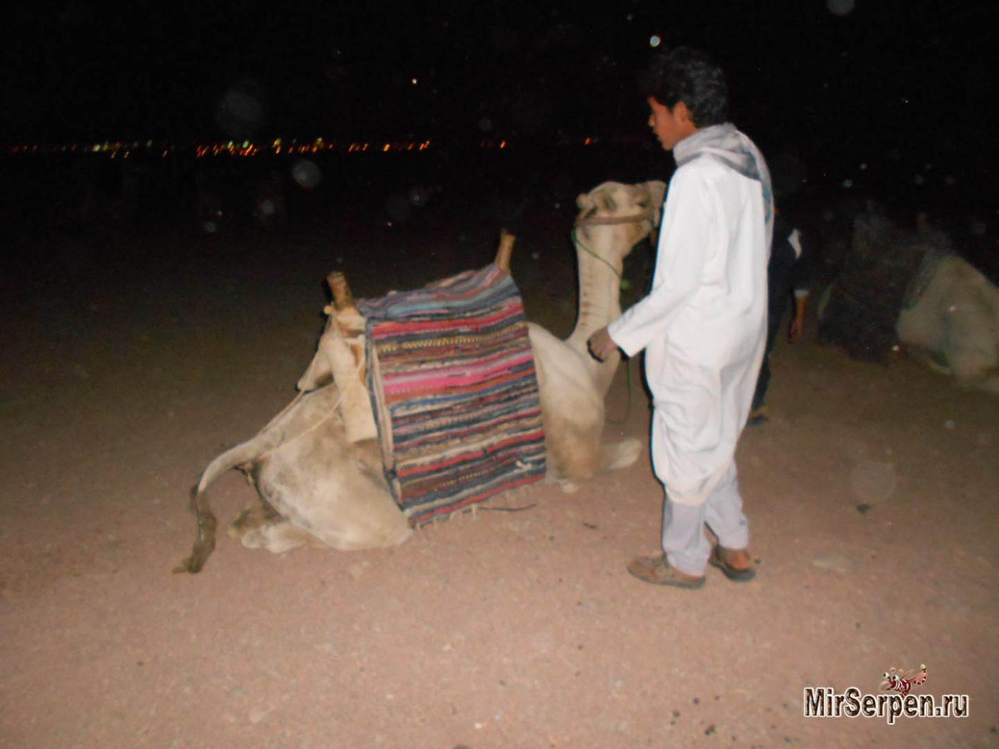 Катание на верблюде - ожидания и реальность