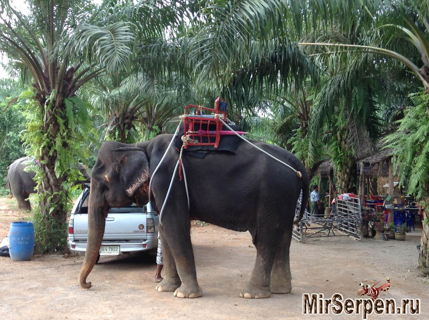 Photo of Катание на слонах – ожидания и реальность