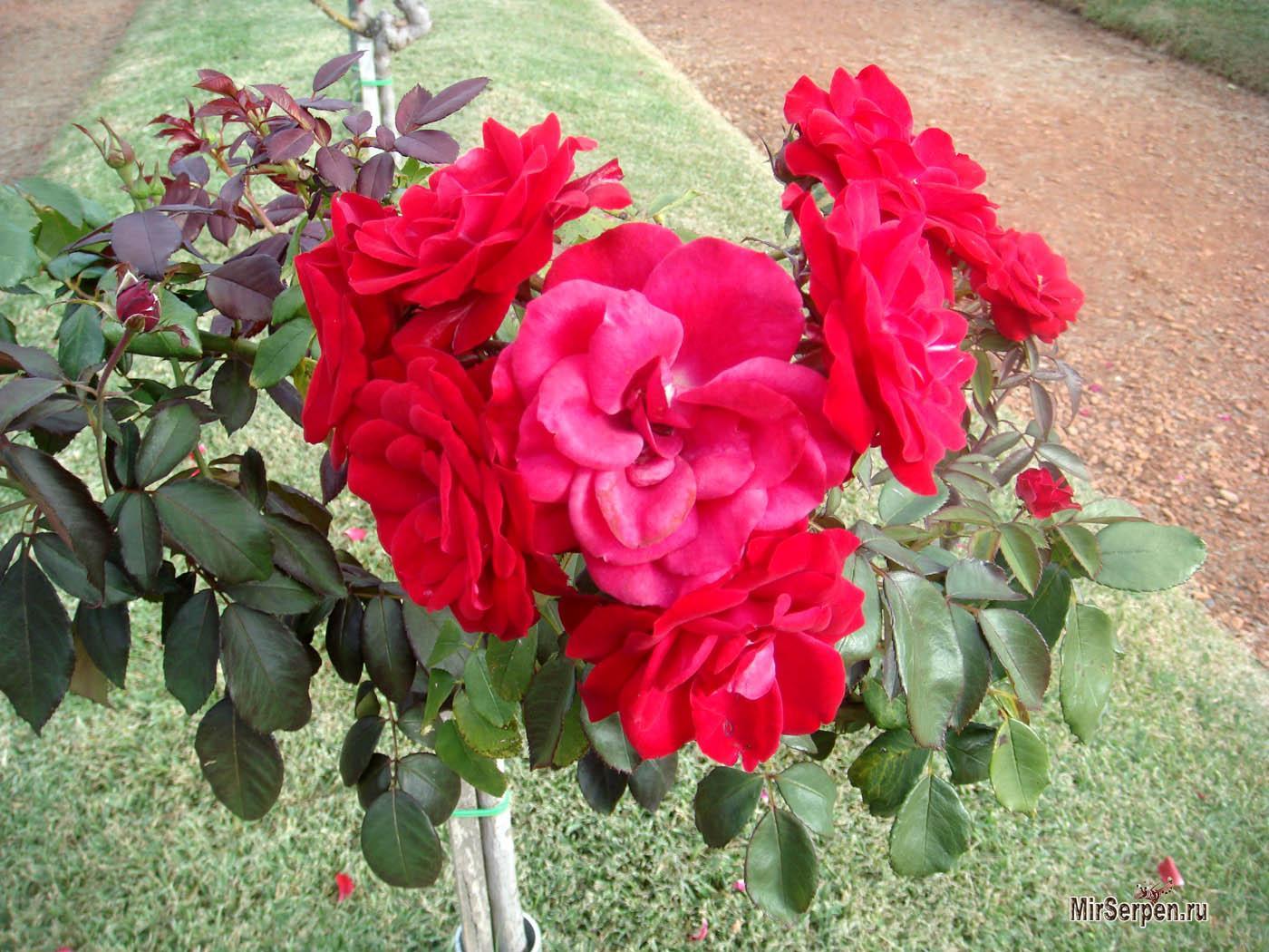 """Парк """"Сад роз"""" в квартале Палермо в Буэнос-Айресе"""