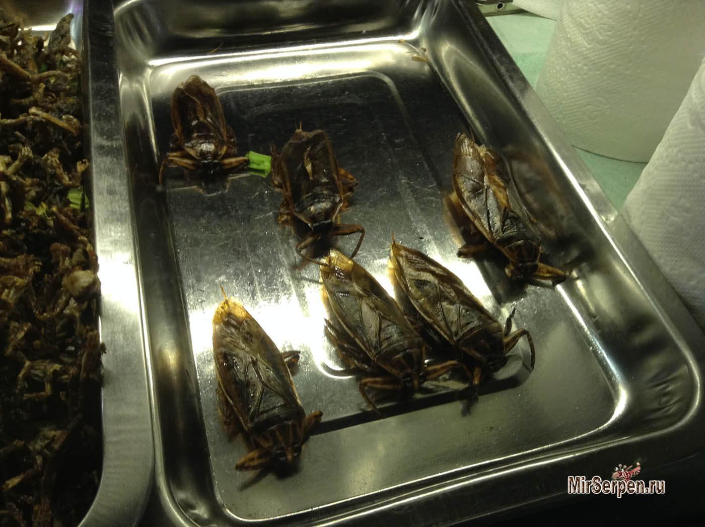 Photo of Тайские тараканы на кухне и в… тарелке