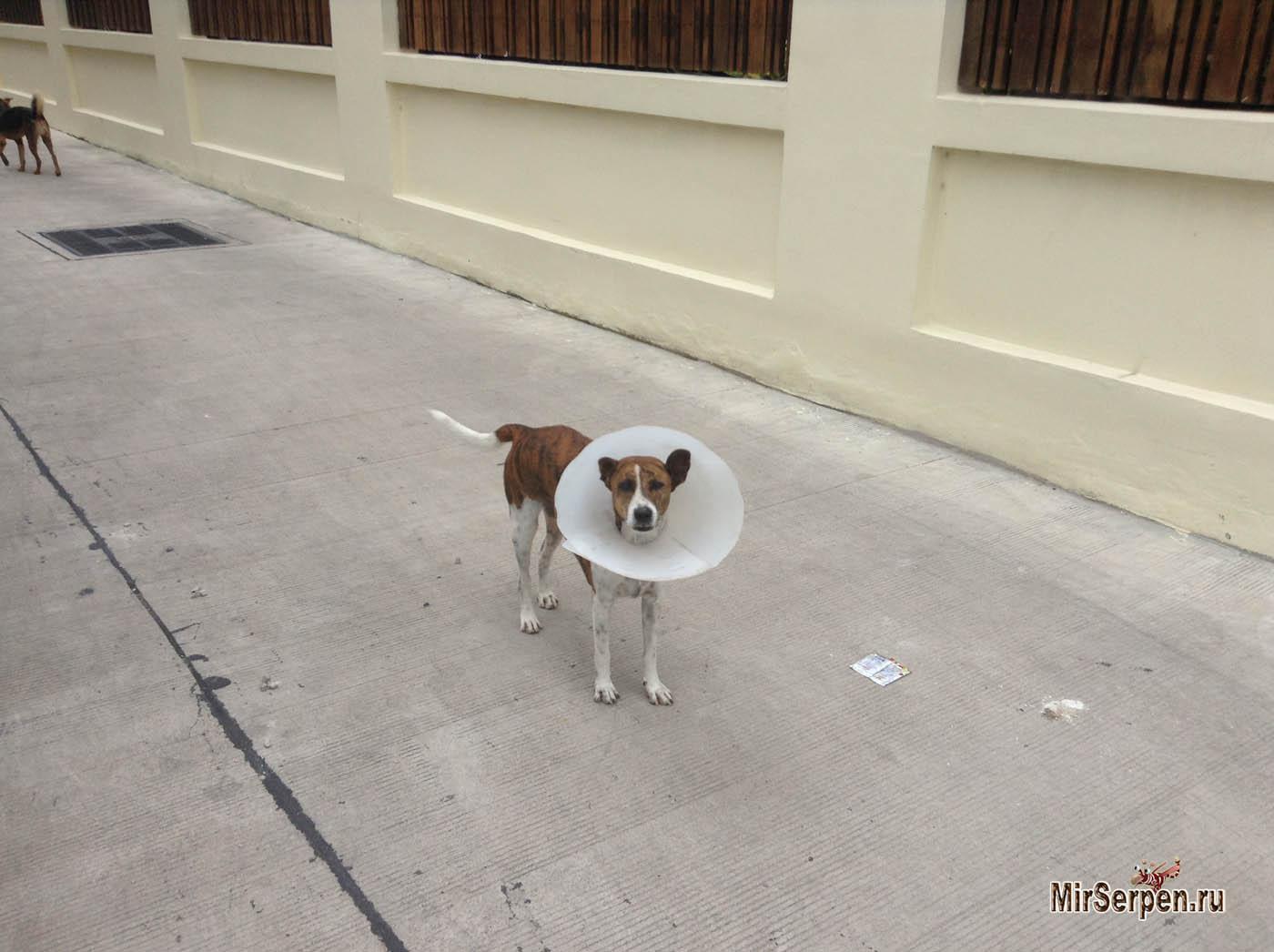 Photo of Про электронную любовь к собакам в Бангкоке