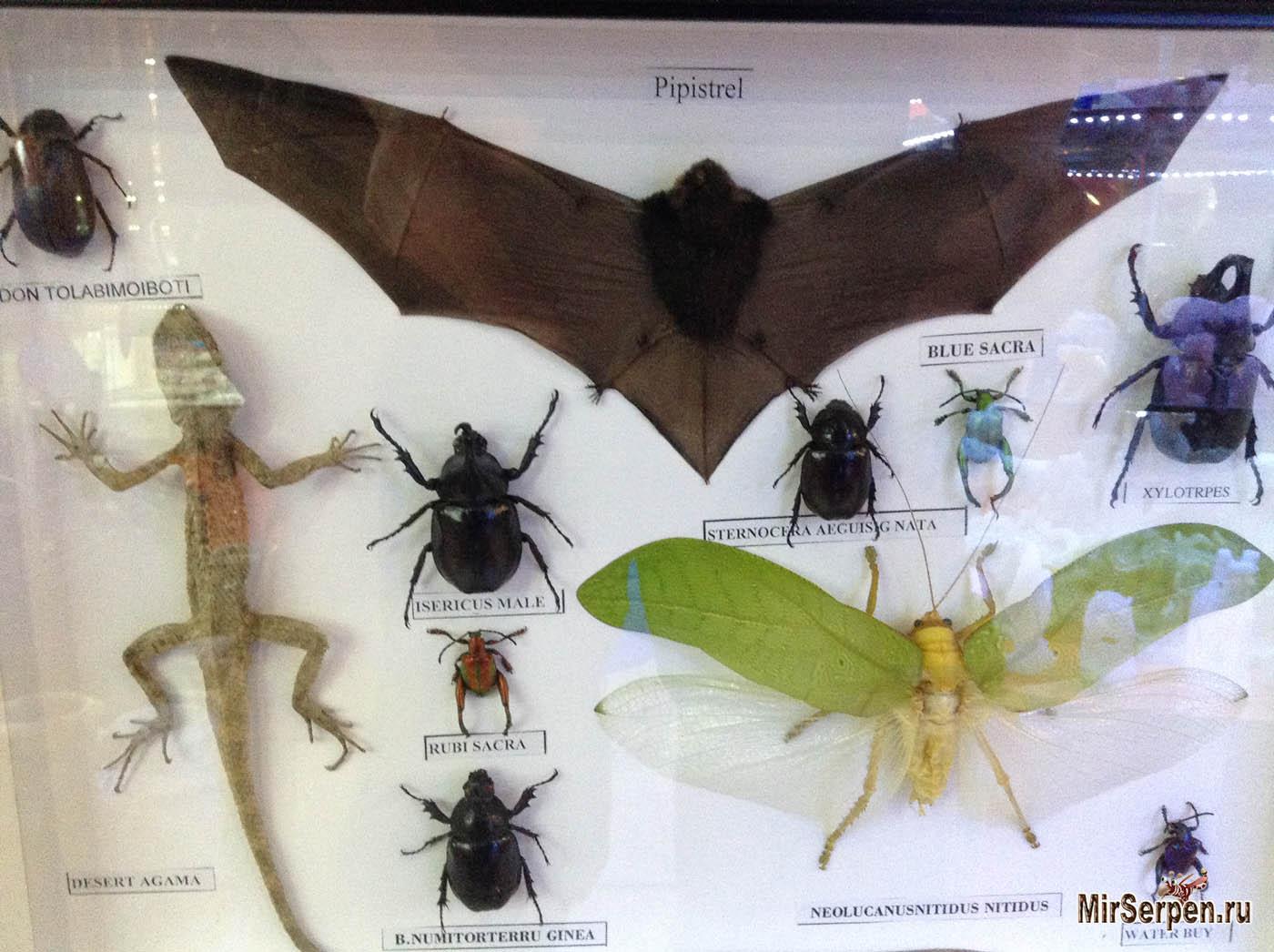 Коллекция жуков на память из Азии