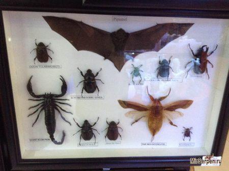 Про Азию: Коллекция жуков на память из Азии