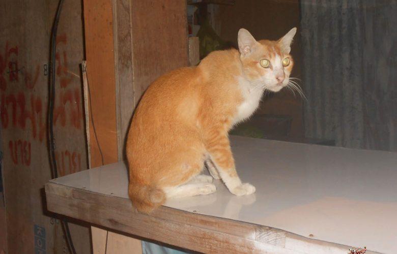 Некотейские заметки про кота и смысл жизни