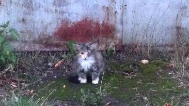 Photo of Спасение рядового котейки
