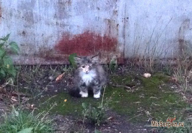 Как мне помог бездомный котенок