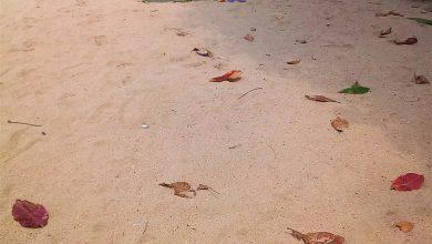 Photo of В Паттайе грязные пляжи, говорят…