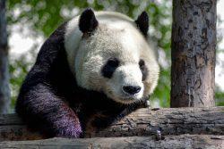 Значение китайских фамилий из списка Байцзясин - Части 1 и 2