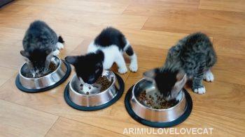 Кореянки из Waveya и их котята