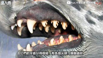Самые зубастые существа в природе