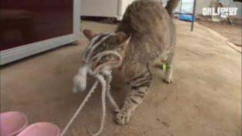 Осьминог пытается съесть кошку