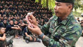 Тайский инструктор учит есть ящерицу